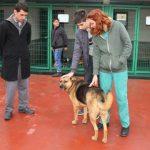 Sahipsiz yavru köpekleri engelli öğrenciler büyütecek