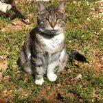 Kaybolan görme engelli kedisini arıyor